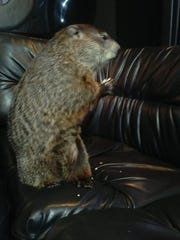 A behind-the-scenes photo of Woody the Woodchuck mentally