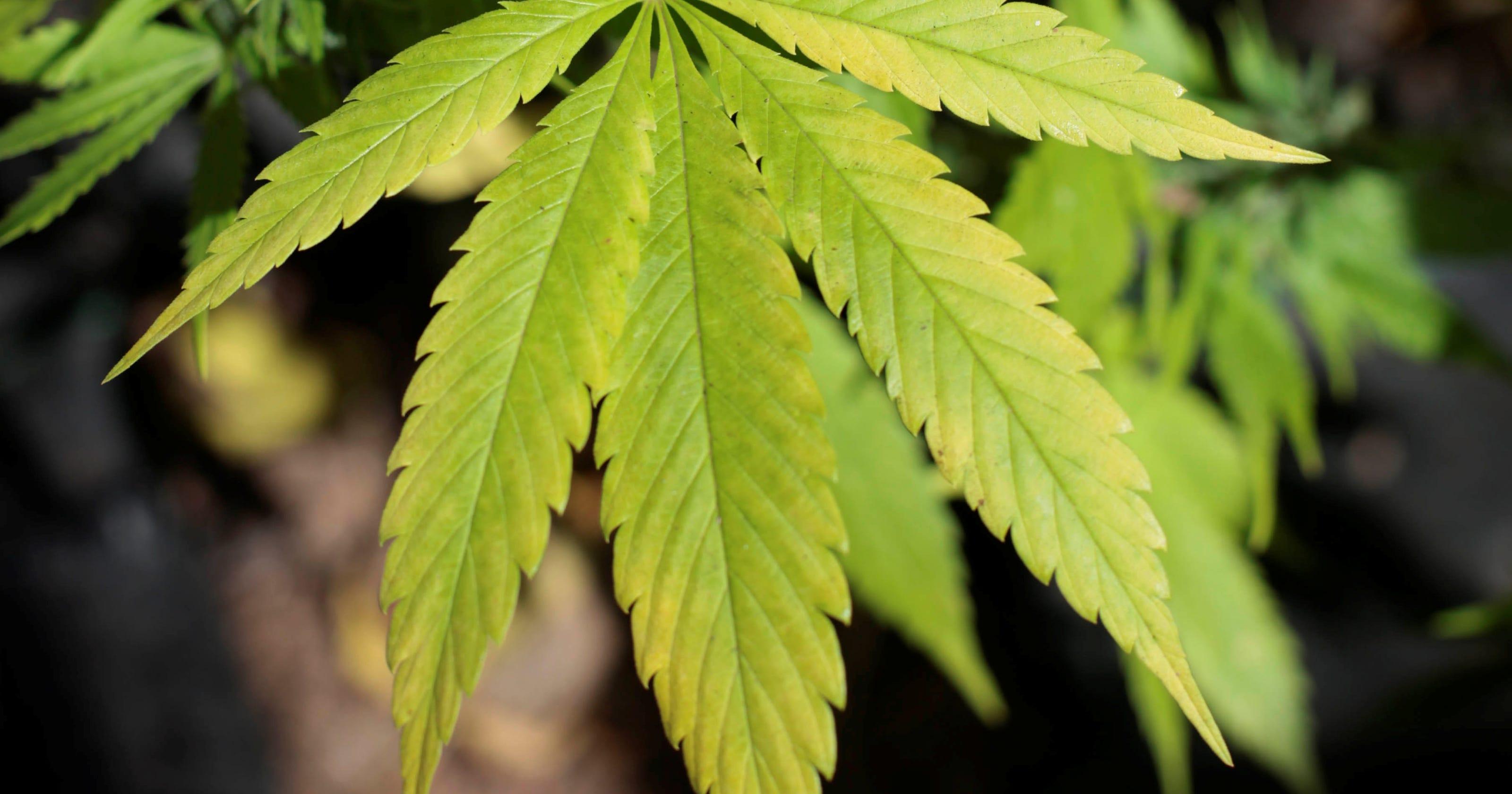 a study on marijuana myths by the media 7 marijuana myths you may believe are true the study found that, while marijuana's cannabinoids can reduce anxiety social media: follow mark gokavi.