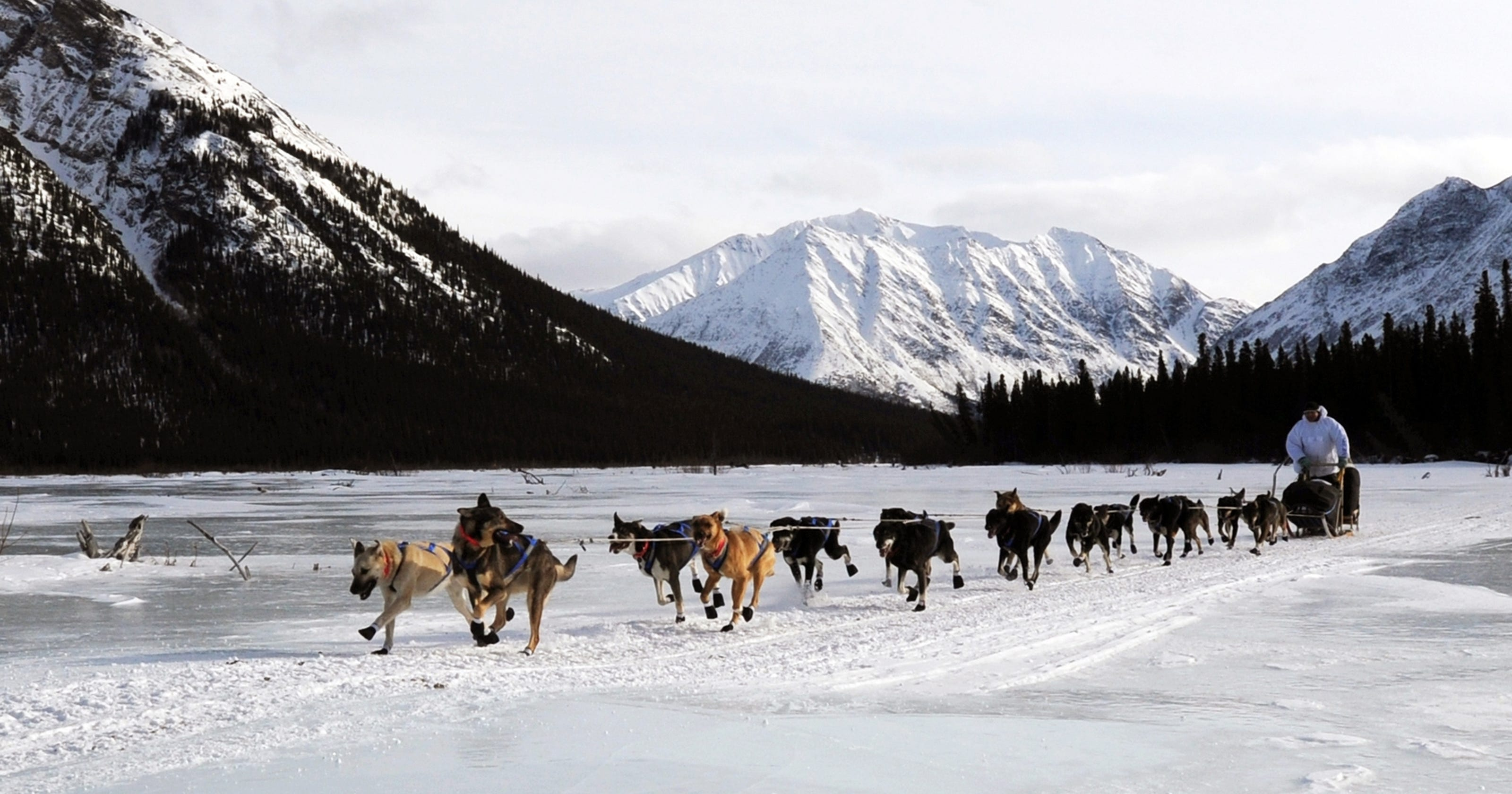 Best Time To Dog Sled In Alaska