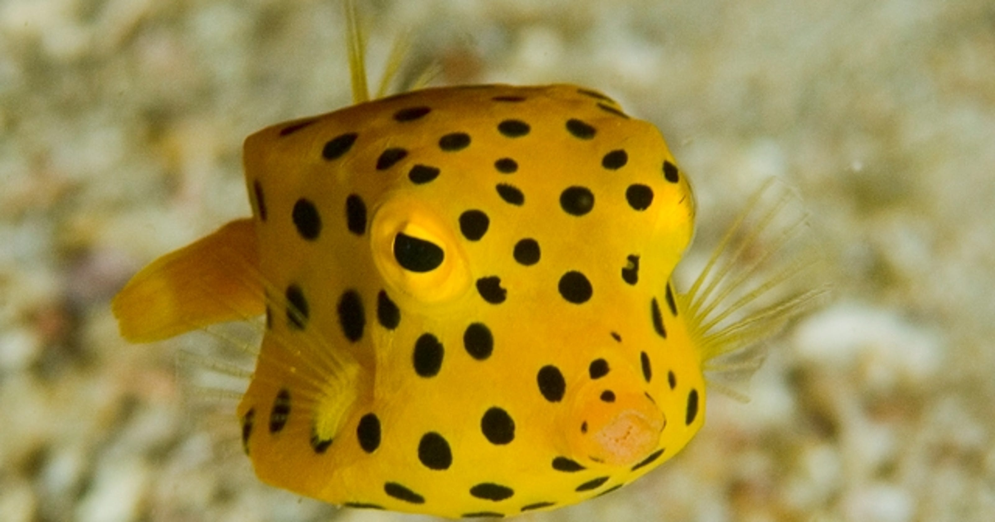 10 craziest fish and where to see them for Yellow fish tank water