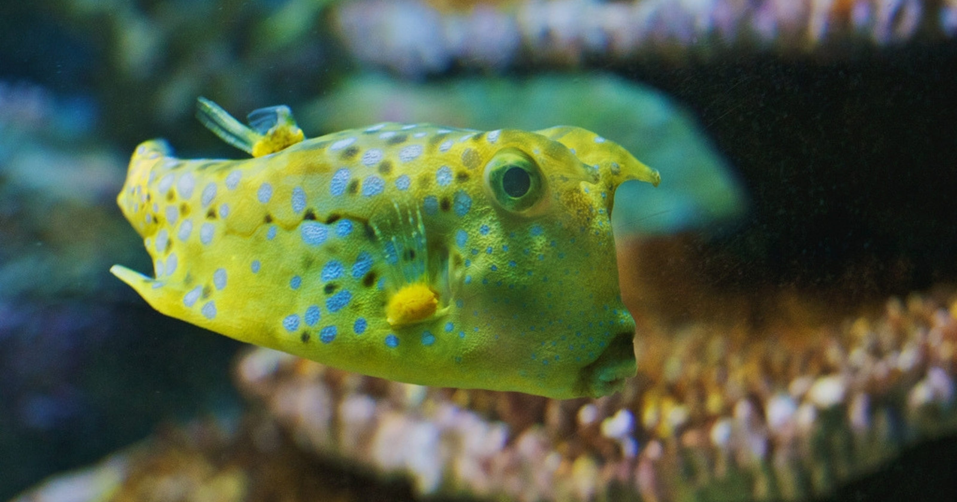 10 craziest fish and where to see them