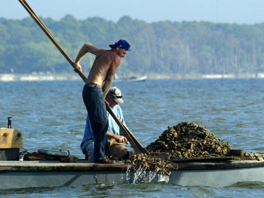 Drought, low flow from the Apalachicola River and post-spill harvesting have led to dangerously low oyster populations in Apalachicola Bay (2011).