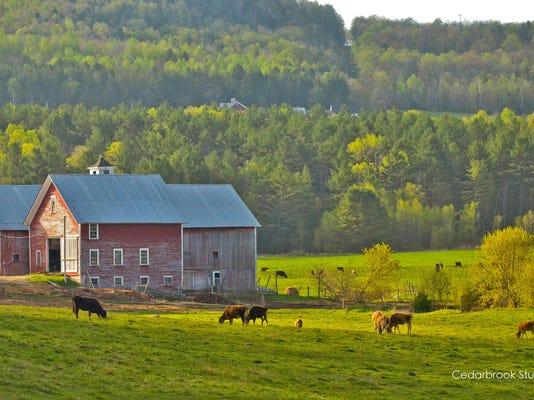BUR 0517 Vermont Beauty