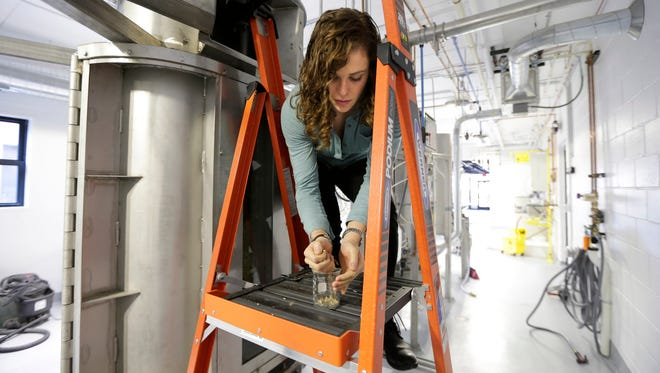 Abby Kanyer, research and development quality coordinator at Proximity Malt, pulls barley for quality testing.