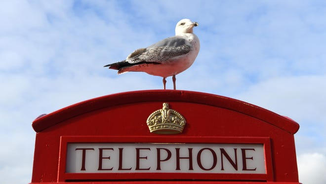 A seagull perches atop an iconic red telephone box in Liverpool, England.