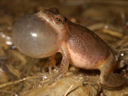 frogs43.jpg