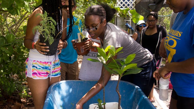 Students in the Upward Bound program participate in a field day event at the Florida Oceanographic Coastal Center in Stuart.
