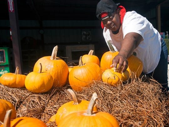 Shemika McNeal helps to create the display of pumpkins for resale at ARC Gateway Nursery on Fairfield Drive Monday afternoon.