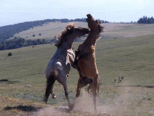 -4-8 p5m Wild Horses.jpg_20120407.jpg