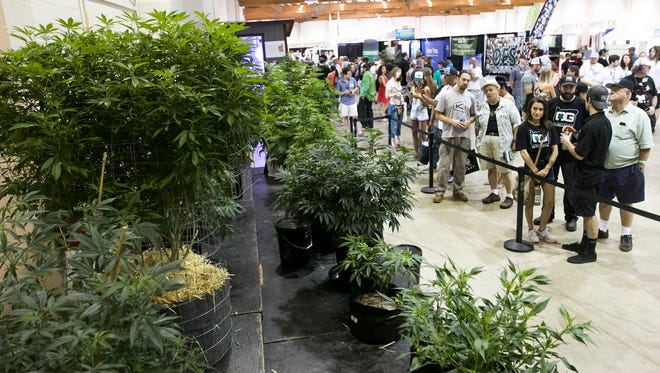 Growers, retailers and other attendees check out marijuana plants entered for competition at the first Cannabis Grower's Fair in Oregon on Saturday, Aug. 13, 2016, at the State Fairgrounds. Judges were looking for characteristics like color, shape and structure, and aroma when deciding on a winning plant.