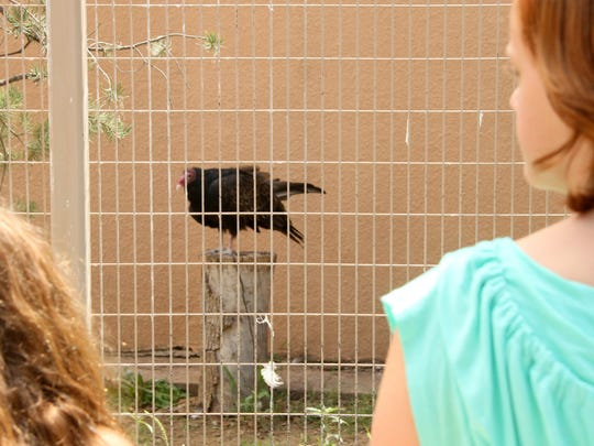 Emmy Walker, 8, and Yancy Whetham, 13, observed a turkey vulture that is housed at Living Desert Zoo and Gardens State Park on Saturday.