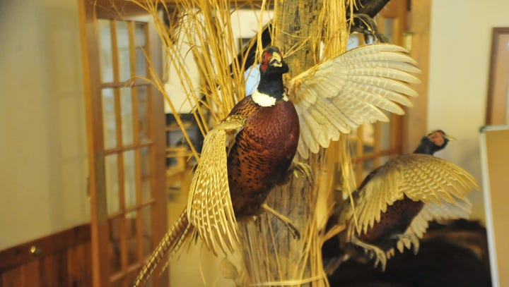 Kids get chance to hunt pheasants and learn about nature