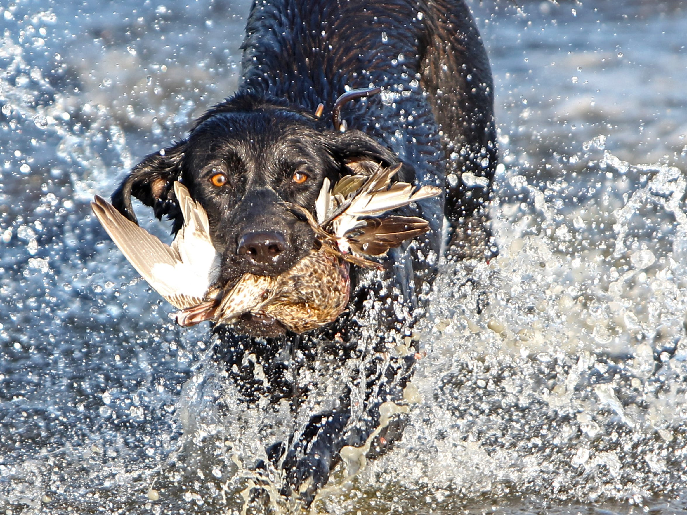 A voucher for a guided duck hunt under the tree might put a smile on the face of the hunter on your Christmas list.