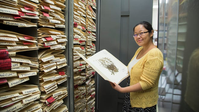 Biology assistant professor Wei Xiao shows a plant specimen out of the thousands housed in the University of Guam Herbarium.