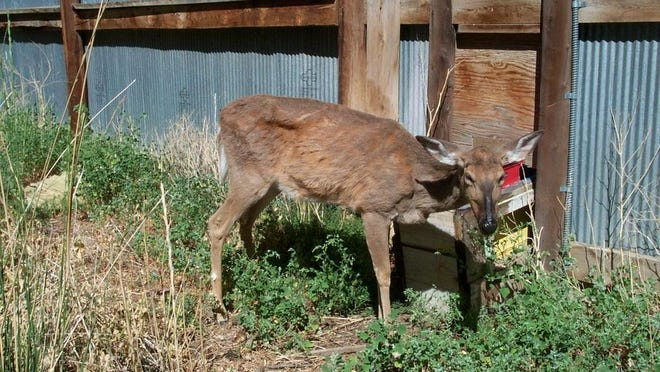 Since CWD was first detected in Minnesota in 2002, the DNR has tested more than 90,000 wild deer in the state.