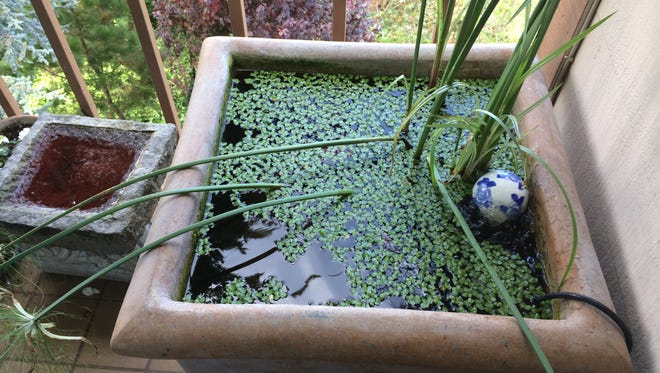 A container pond put together using a planter, floating aquatic plants and a mix of goldfish on a patio in San Francisco. The pond contains a bubbler, a filter, and an Asian ceramic ball as a decorative element. (AP Photo/Katherine Roth)