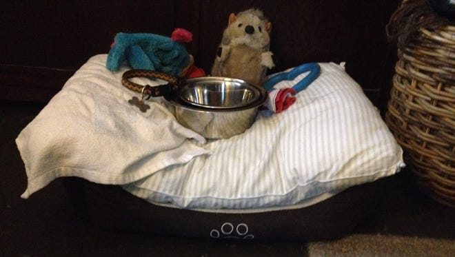 A few of Toby's belongings, including his collar and his last squeaky toy, sit in his bed.
