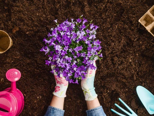 Gardening is a wonderful spring activity, but it's bound to upset your allergies.