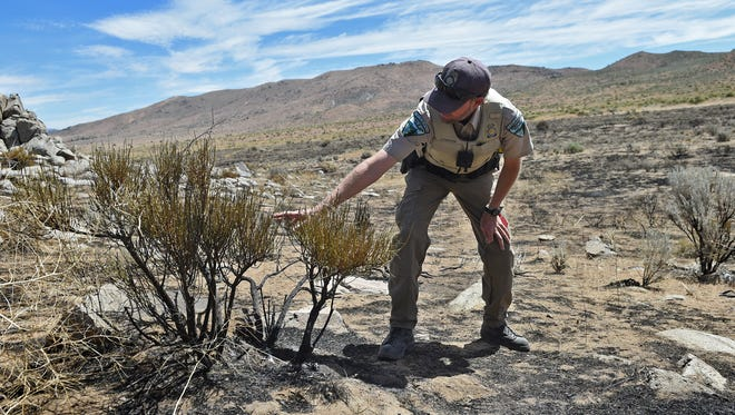 Scott Fischer, a BLM fire investigator, points out clues that he looks for while investigating a brush fire.  He stands in an area in Golden Valley where a brush fire was started by recreational target shooter. The people involved attempted to put the fire out but where unable to and called 911.