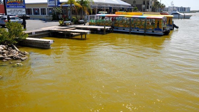 Brown tide has been one of the recent problems plaguing the Indian River lagoon.