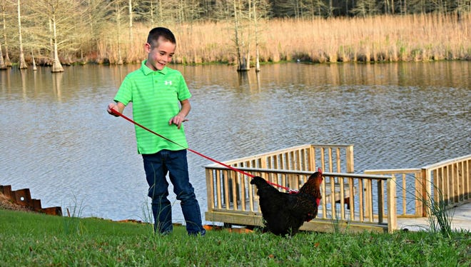 Tucker Lampkin and his pet chicken Goldilocks enjoying an afternoon stroll at the lake.