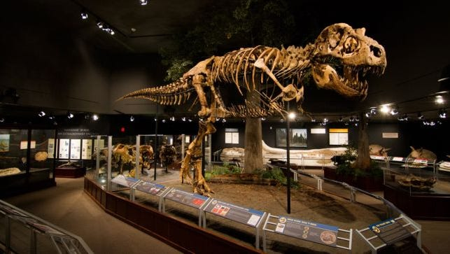 Montana: Museum of the Rockies in Bozeman. Admission: $14.50 adults, $13.50 seniors (65+), $9.50 children (5-17), free children 4 and under. Annual attendance: 170,000. Known for: Dinosaur exhibits and planetarium.