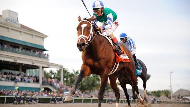 Materiality won Saturday's Florida Derby at Gulfstream Park.