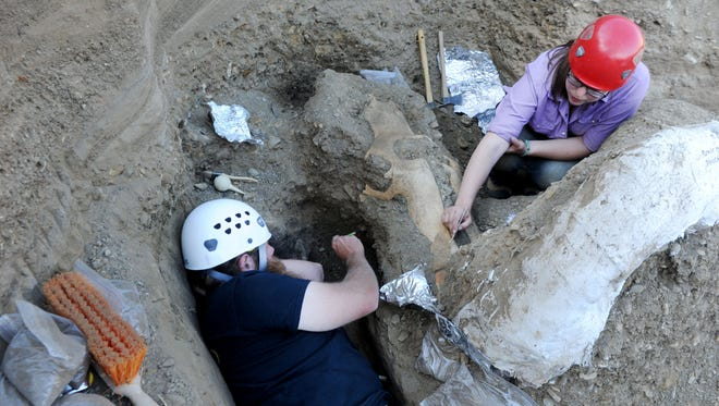Paleontologist Justin Wilkins, left, and preparator Monica Bugbee dig around the skull and tusks of a mammoth found on the north end of Santa Rosa Island.