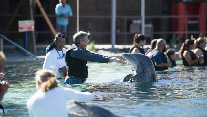 Ron Despain, 61, greets a dolphin in the water at Dolphinaris Arizona on the Salt River Reservation on Oct. 15, 2016. The facility allows customers to swim with dolphins in an up-close environment.