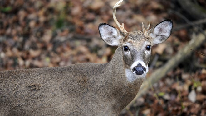 While the numbers were depressed across the state, Marion County and Morrow County both saw an increase in the harvest this deer-gun season compared to last year.