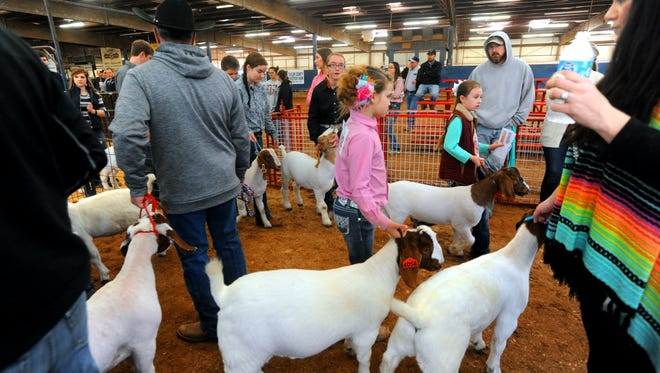 Contestants waiting to compete make room for the ones leaving the arena in the Taylor County Livestock Goat Show Thursday, Jan. 19, 2017.