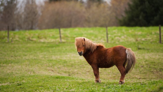 Baltimore City Public Schools recently approved the use of miniature horses as service animals for students.