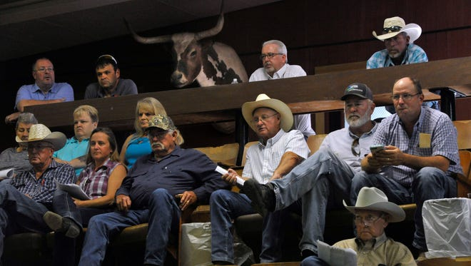 Buyers watch and bid on donated items at Abilene Livestock Auction Tuesday Sept. 19, 2017, during a sale to benefit the West Texas Rehabilitation Center. Round-Up for Rehab in Abilene raised more than $63,000. The stuffed longhorn in the top row was not bidding.