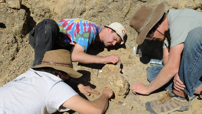 (Left to right) Ruben Underwood-Aguilar, Jonathan Hoffman and Chris Everett chip rock away from the skull of a sirenian, or sea cow, on Santa Rosa Island. The rare sea cow fossil is the first to be found on the remote island off Ventura. Santa Rosa Island is part of Channel Islands National Park.