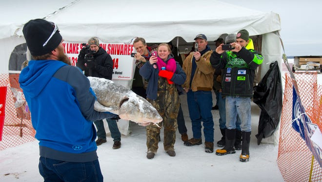 P.D. Lail, Jr. shows off his catch following the 2014 lake sturgeon season.
