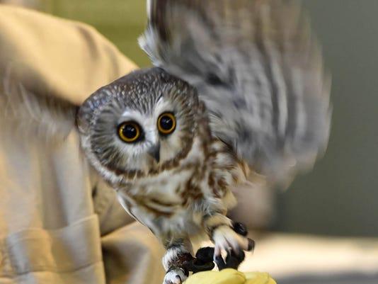 636552631035414415-DCN-0228-Ridges-owl-o-rama-preview-2.jpg
