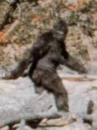 This is frame 352 from the Patterson-Gimlin film taken on Oct. 20, 1967, claiming to depict Bigfoot/Sasquatch/Colton.