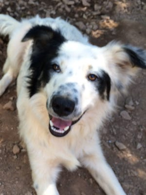 Maggie 9 month old Border Collie mix