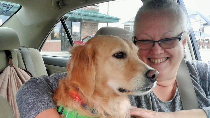 Rescue dogs (probably) relish transition from cages to cars
