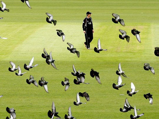 LONDON, ENGLAND - MAY 04: James Hildreth of Somerset stands amongst pigeons in flight during the Clydesdale Bank Pro40 match between Surrey and Somerset at The Kia Oval on May 4, 2012 in London, England. (Photo by Scott Heavey/Getty Images)