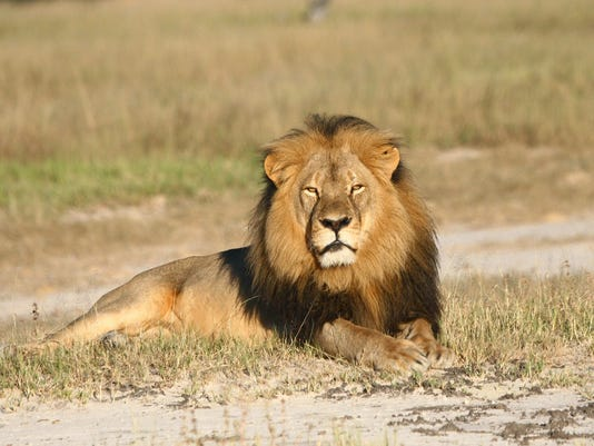 Zimbabwe Lion Killed_Morg