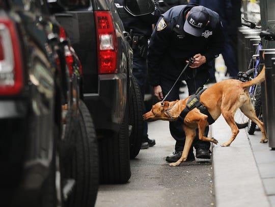 Un policía canino olfatea varios vehículos en busca
