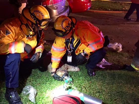 Emergency responders give a dog oxygen after it was