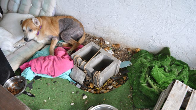 Lee County Animal Services removed this dog from her friend's nearby home.