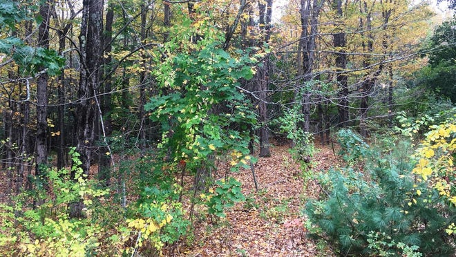 Town Meeting voters have approved the purchase of a 24-acre land tract known as Brown's Woods., located at 119 Tahattawan Road. Funds for the purchase will come from several sources, including a state grant.