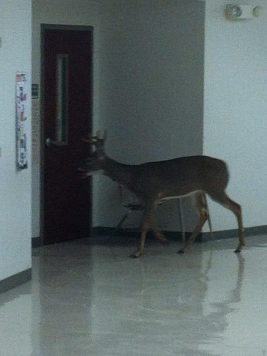 100213clarksville-high-deer