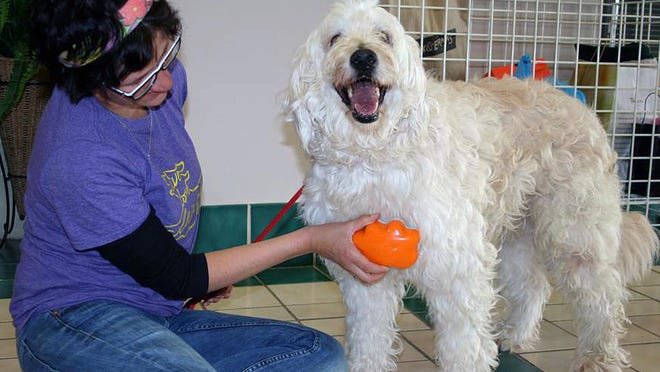 An employee at Capital Area Humane Society in Columbus, Ohio, brushes adoptable dog Princess with an orange Groom Genie. Before she ever sold one, inventor Rikki Mor of Denver donated the brushes to several shelters across the country.