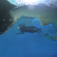 11Alive gets a first-hand look at massive whale sharks