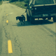 Photo questioned: Man walks dog with truck