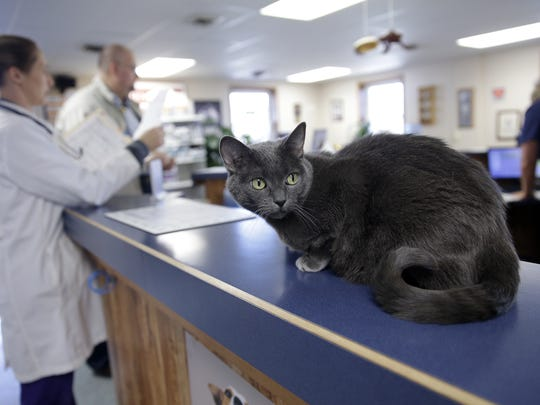 Birdie keeps a watchful eye from her perch on the reception counter at the Animal Hospital of De Pere as veterinarian Dr. Jennifer Stoll talks with a client.